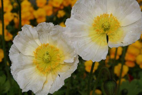 キャンパス中庭の花をパチリ。