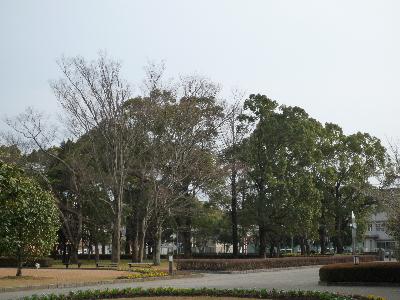 居心地よさそうな木たち