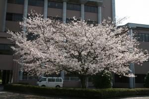 ものすごい咲きっぷり。