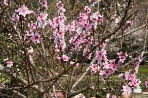 桜に負けず劣らず。